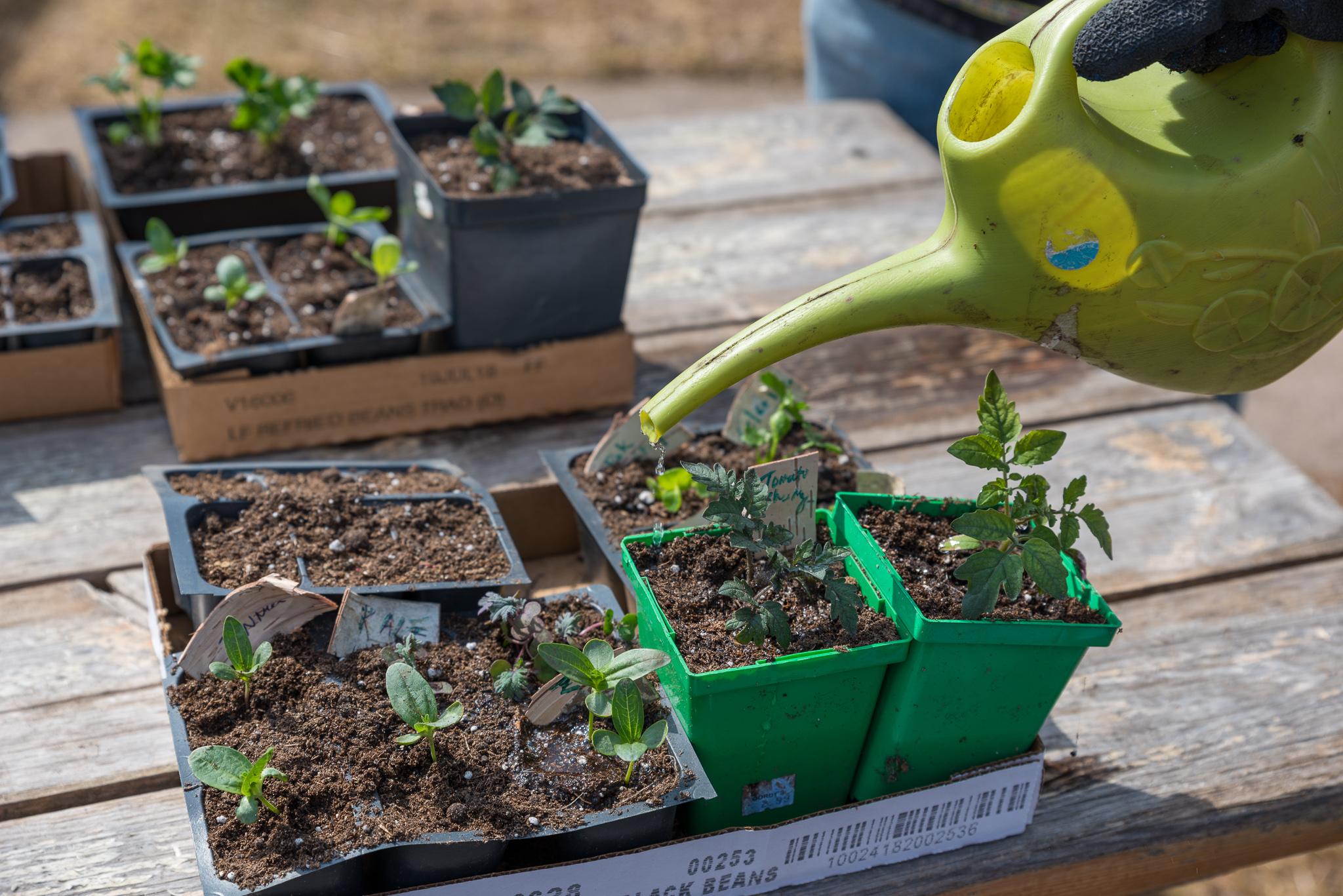 Duluth Folk School Class Gardening for Beginners